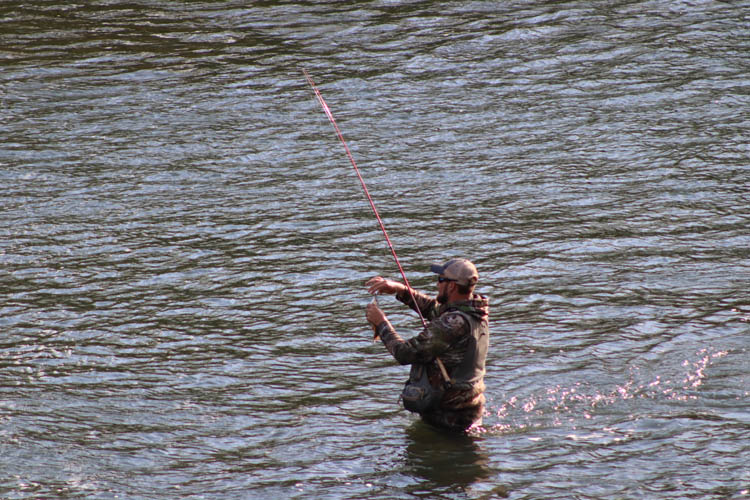 trout fishing on the elk
